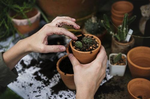 woman preparing flowerpots